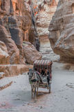 Путь siq в nabatean городе petra Иордании Стоковые Изображения RF