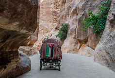The siq path in nabatean city of  petra jordan Royalty Free Stock Image