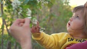 Sira de mãe à mostra às flores do bebê em árvores no movimento lento vídeos de arquivo