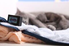 Sira de mãe ao gato que amamenta seus bebês, câmera da ação na cena Fotografia de Stock