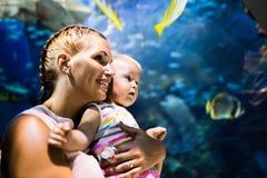 Sira de mãe e sua vida marinha de observação da criança no oceanarium imagem de stock royalty free