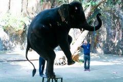 Sirachadierentuin Chonburi, Sep van Thailand, 2017: olifant die een show uitvoeren Royalty-vrije Stock Foto