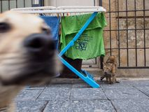 Siracusa Italien - Oktober 11: Dog photobombsfotoet av den förskräckta katten på Oktober 11, 2014 i Siracusa, Italien Arkivfoton