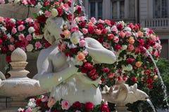 Siren of Jacobins fountain, full of Roses Stock Image