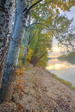 Siret river in autumn forest Stock Image