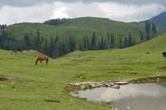 Siri Paye Meadows Pakistan Arkivbilder