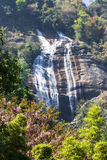 Siribhum waterfall With Wild Himalayan Cherry Royalty Free Stock Images