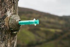 Siringa inserita in un albero fotografia stock