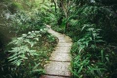 Siriphum walkway,Chiang Mai province. Thailand ,vintage style Royalty Free Stock Photo