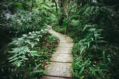 Siriphum walkway,Chiang Mai province. Thailand ,vintage style Stock Photography