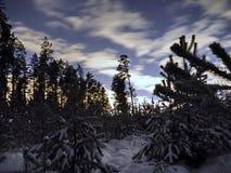 Sirius gwiazda na nocnym niebie i śnieg w zima lesie obraz royalty free