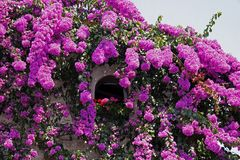 Sirmione, casa italiana con il bougainvillea Fotografia Stock Libera da Diritti
