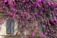 Sirmione, Italian House With Bougainvillea Royalty Free Stock Image