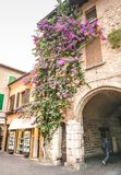 SIRMIONE, ITALY Facade of house in center of Sirmione with flowering pink bougainvillea.traditional summer facade decoration of a. N old house in Italy, italy stock photo