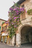 SIRMIONE, ITALY Facade of house in center of Sirmione with flowering pink bougainvillea.traditional summer facade decoration of a. N old house in Italy, italy royalty free stock photo