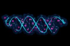 Free SiRNA:mRNA Interaction Stock Image - 130642531