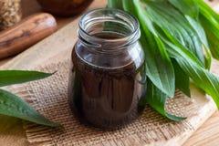 Sirop de plantain de Ribwort avec les feuilles fraîches de plantain photographie stock