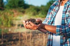 Sirva al granjero que sostiene la plántula en manos contra fondo de la primavera Concepto de la ecología del Día de la Tierra Cié Imagen de archivo
