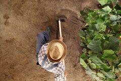 Sirva al granjero que trabaja con la azada en el huerto, azadonando el suelo Fotos de archivo