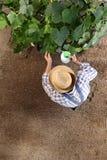 Sirva al granjero que trabaja en el huerto, esprayes del pesticida en plan Fotos de archivo libres de regalías