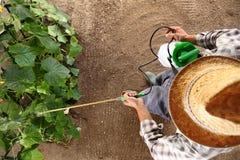 Sirva al granjero que trabaja en el huerto, esprayes del pesticida en plan Fotografía de archivo libre de regalías