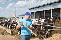 Sirva al granjero que trabaja en granja con las vacas lecheras Imagen de archivo libre de regalías
