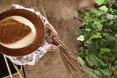 Sirva al granjero que trabaja en huerto con los palillos de bambú para el ti Imágenes de archivo libres de regalías