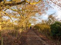 Sirva caminar abajo de natur exterior trepador del carril de la trayectoria del país del otoño Imagenes de archivo