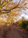 Sirva caminar abajo de natur exterior trepador del carril de la trayectoria del país del otoño Fotografía de archivo