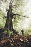 Sirva cerca de árbol viejo gigante en bosque encantado con niebla Imagenes de archivo
