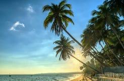 Sirva el libro de lectura que se sienta al lado de las palmeras del coco en la playa tropical imagenes de archivo