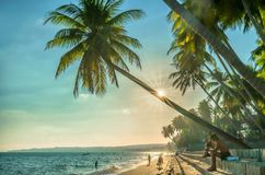Sirva el libro de lectura que se sienta al lado de las palmeras del coco en la playa tropical fotografía de archivo libre de regalías