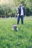 Sirva el paseo con el dogo francés en parque de la ciudad imagen de archivo