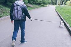 Sirva el paseo con el dogo francés en parque de la ciudad fotos de archivo libres de regalías