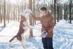 Sirva jugar con el perro del husky siberiano en parque nevoso Fotos de archivo