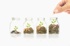 Sirva la mano con el dinero en botella clara en el fondo, la planta y las monedas, la inversión y los conceptos blancos del negoc foto de archivo