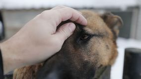 Sirva la mano del ` s que frota ligeramente el hocico del ` s del perro almacen de metraje de vídeo