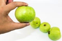 Sirva la mano del ` s que sostiene la guayaba dulce fresca verde imagen de archivo libre de regalías