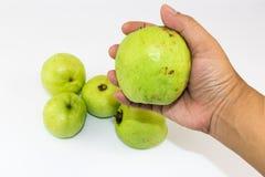 Sirva la mano del ` s que sostiene la guayaba dulce fresca verde foto de archivo