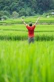 Sirva la situación en campo del arroz Fotos de archivo libres de regalías