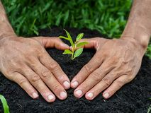 Sirva las manos que plantan el árbol en el suelo Establecimiento de concepto imagen de archivo libre de regalías