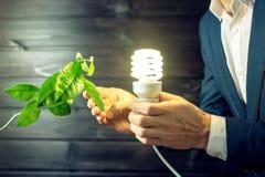 Sirva llevar a cabo brillar intensamente ligero cerca del árbol verde del brote Fotografía de archivo libre de regalías
