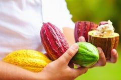 Sirva llevar a cabo las diversas clases de vainas coloridas del cacao en manos Imagenes de archivo