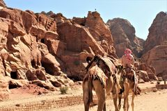 Sirva los camellos del montar a caballo en el postre del Petra imágenes de archivo libres de regalías