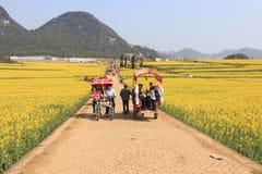 Sirva montar un waterbuffalo para los turistas entre los campos de flores de la rabina de Luoping en Yunnan China Foto de archivo
