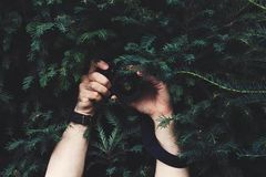 Sirva ocultado en la oscuridad del árbol de la conífera, sosteniendo la cámara en sus manos imagen de archivo libre de regalías
