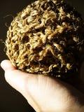 Sisal agave Royalty Free Stock Image