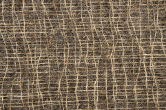 Sisal fibers Stock Images