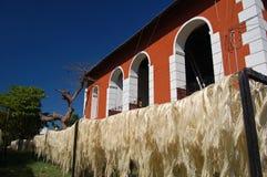Sisalhampakoloni/Merida, Mexico Royaltyfri Foto