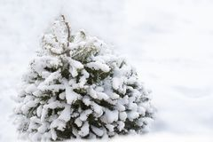 Sista andedräkt av vintern Arkivbild